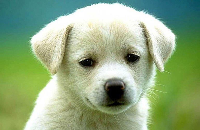 Σκυλιά για υιοθεσία από το Φιλοζωικό   politischios.gr